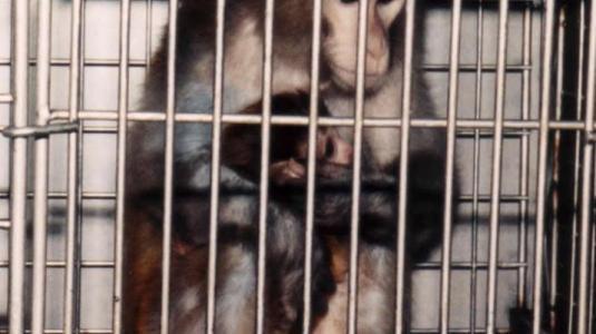 Η μάχη για τα πειραματόζωα και τα δικαιώματα των ζώων... - Φωτογραφία 1
