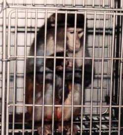 Η μάχη για τα πειραματόζωα και τα δικαιώματα των ζώων... - Φωτογραφία 3
