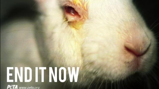 Η μάχη για τα πειραματόζωα και τα δικαιώματα των ζώων... - Φωτογραφία 4
