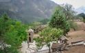 Το ψηλότερο χωριό της Ελλάδας (αλλά και των Βαλκανίων), είναι χτισμένο σε υψόμετρο 1.600 μέτρων! - Φωτογραφία 6