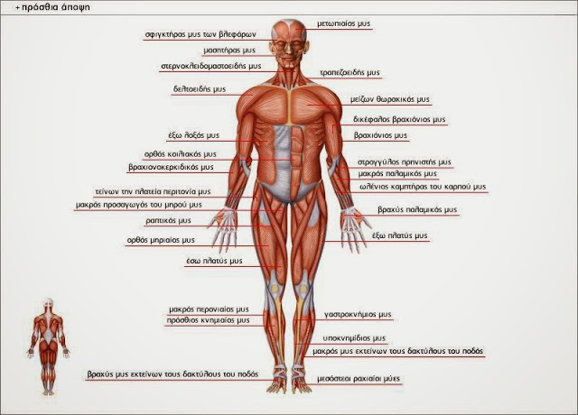 Πως λειτουργεί το σώμα μου ? - Φωτογραφία 1