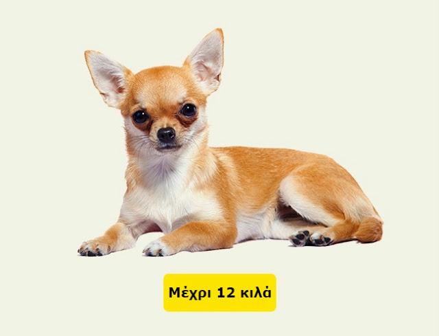 Δείτε πως να υπολογίσετε την ηλικία ενός σκύλου ή μιας γάτας σε ανθρώπινο χρόνια... - Φωτογραφία 3