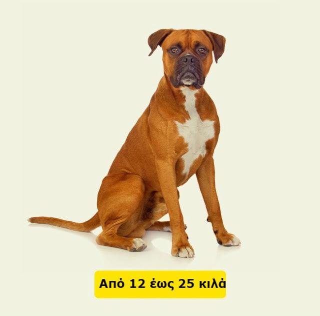 Δείτε πως να υπολογίσετε την ηλικία ενός σκύλου ή μιας γάτας σε ανθρώπινο χρόνια... - Φωτογραφία 5