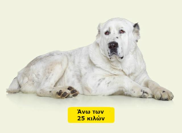 Δείτε πως να υπολογίσετε την ηλικία ενός σκύλου ή μιας γάτας σε ανθρώπινο χρόνια... - Φωτογραφία 7