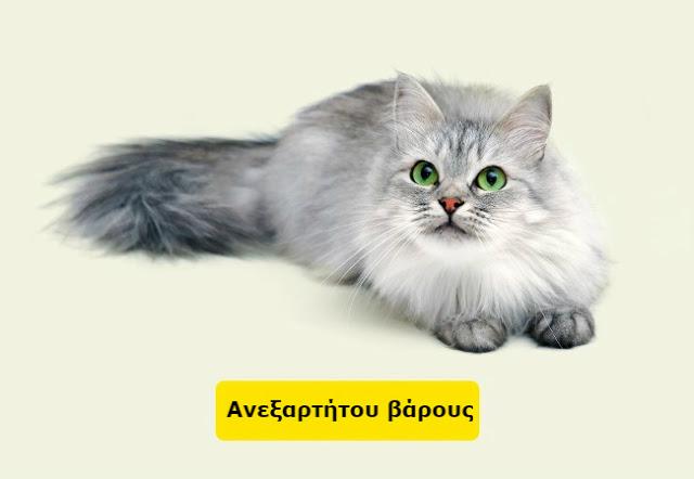 Δείτε πως να υπολογίσετε την ηλικία ενός σκύλου ή μιας γάτας σε ανθρώπινο χρόνια... - Φωτογραφία 9