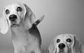 Πώς γερνούν τα σκυλιά; Μία ιδιαίτερα συγκινητική φωτογράφιση
