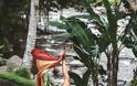 FOUR SEASONS RESORT SAYAN UBUD, BALI Στις σουίτες του πιο εντυπωσιακού Resort στον κόσμο - Φωτογραφία 23