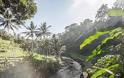 FOUR SEASONS RESORT SAYAN UBUD, BALI Στις σουίτες του πιο εντυπωσιακού Resort στον κόσμο - Φωτογραφία 33