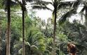 FOUR SEASONS RESORT SAYAN UBUD, BALI Στις σουίτες του πιο εντυπωσιακού Resort στον κόσμο - Φωτογραφία 36
