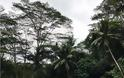 FOUR SEASONS RESORT SAYAN UBUD, BALI Στις σουίτες του πιο εντυπωσιακού Resort στον κόσμο - Φωτογραφία 57