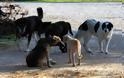 Σύσκεψη φορέων στο Αγρίνιο την Τετάρτη για τη διαχείριση αδέσποτων και δεσποζόμενων ζώων