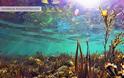 Ο βυθός της λίμνης Τριχωνιδας σε εικόνες - Φωτογραφία 1