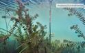 Ο βυθός της λίμνης Τριχωνιδας σε εικόνες - Φωτογραφία 2