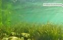 Ο βυθός της λίμνης Τριχωνιδας σε εικόνες - Φωτογραφία 4
