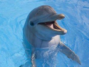 Τα δελφίνια αναγνωρίζουν τον εαυτό τους στον καθρέφτη - Φωτογραφία 1