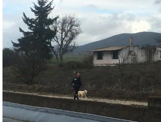 Σκυλάκι απεγλωβίστηκε απο την Π.Υ στο κανάλι του Μόρνου κοντά στις Ερυθρές - Φωτογραφία 1