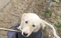 Σκυλάκι απεγλωβίστηκε απο την Π.Υ στο κανάλι του Μόρνου κοντά στις Ερυθρές - Φωτογραφία 3