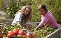 «Υιοθέτησε τη ντομάτα μου»: Μία γυναίκα δημιούργησε το πιο παράξενο site γνωριμιών!