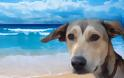 Τα πιο σημαντκά μυστικά που δεν σας λέει το σκυλί σας και πρέπει να ξέρετε!