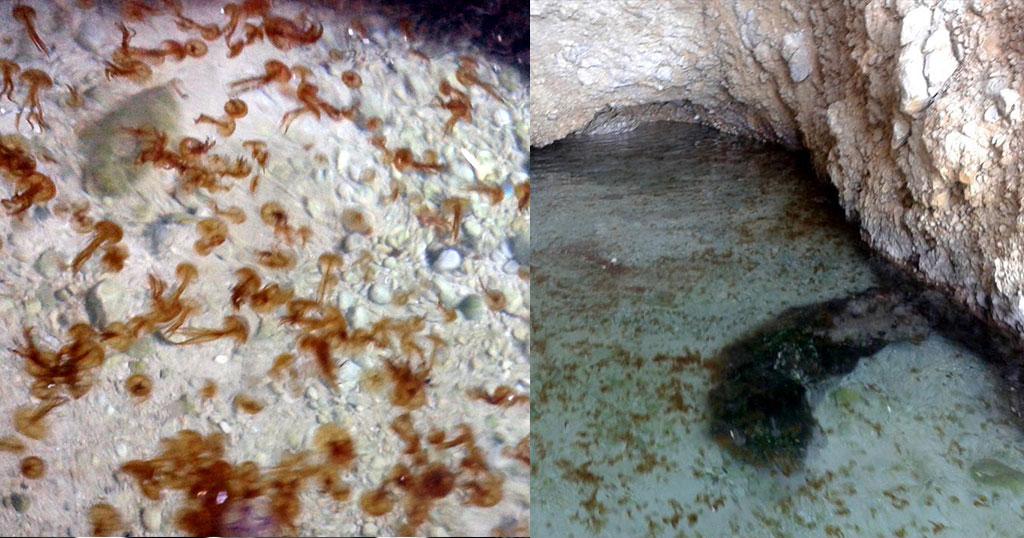 Αποικία με τσούχτρες εντοπίστηκε σε σπηλιά στον Κορινθιακό - Φωτογραφία 1