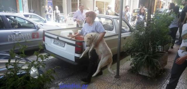 Στους δρόμους οι φιλόζωοι του Αγρινίου – Αναλαμβάνουν δράση! - Φωτογραφία 1