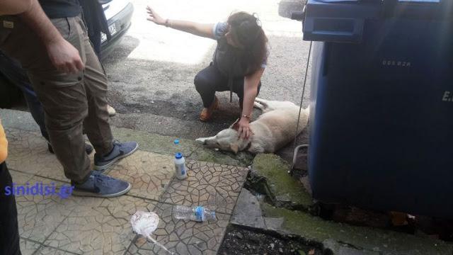 Στους δρόμους οι φιλόζωοι του Αγρινίου – Αναλαμβάνουν δράση! - Φωτογραφία 2
