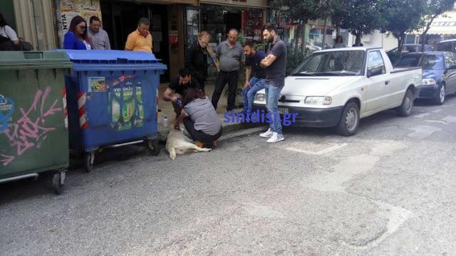 Στους δρόμους οι φιλόζωοι του Αγρινίου – Αναλαμβάνουν δράση! - Φωτογραφία 5