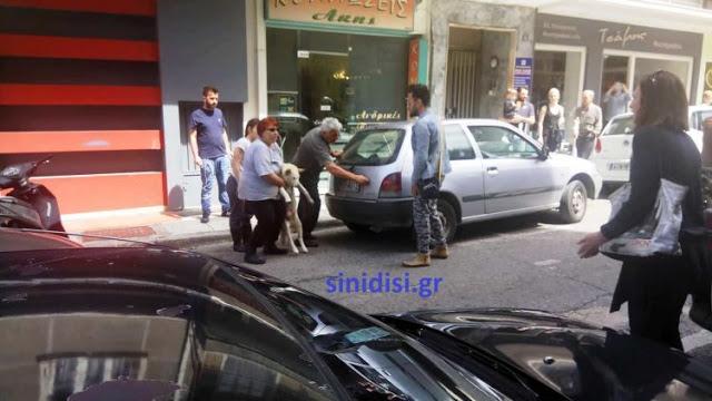 Στους δρόμους οι φιλόζωοι του Αγρινίου – Αναλαμβάνουν δράση! - Φωτογραφία 7