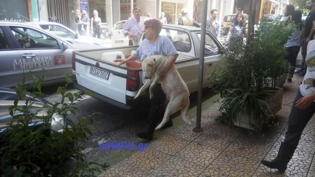 Στους δρόμους οι φιλόζωοι του Αγρινίου – Αναλαμβάνουν δράση! - Φωτογραφία 8