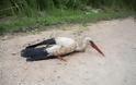 Λαμία: Έσωσε τον πελαργό που είχε πέσει σε κανάλι - Φωτογραφία 5