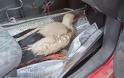 Λαμία: Έσωσε τον πελαργό που είχε πέσει σε κανάλι - Φωτογραφία 6