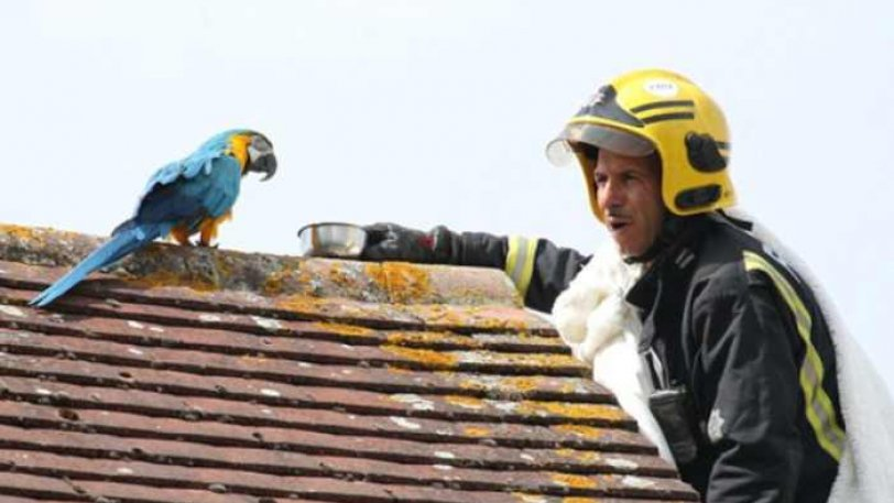 Πυροσβέστες σώζοντας παπαγάλο άρχισε να τους βρίζει στα ελληνικά - Φωτογραφία 1