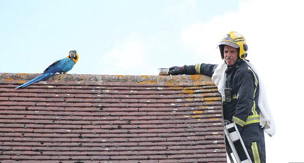 Πυροσβέστες σώζοντας παπαγάλο άρχισε να τους βρίζει στα ελληνικά - Φωτογραφία 4