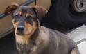 Η αστυνομία για τα περιστατικά θανάτωσης ζώων σε Αγρίνιο και Αχαΐα