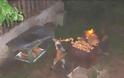 Αλεπού τσιμπάει σουβλάκι από ψησταριά [Photo] - Φωτογραφία 1