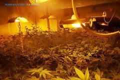 Καλλιεργούσαν κάνναβη μέσα σε σπίτι στο Μαρκόπουλο (ΕΙΚΟΝΕΣ)
