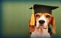 Αυτές είναι οι πιο έξυπνες ράτσες σκύλων!