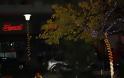 αναμα δεντρο κατοθνα πανος τσουτσουρας - Φωτογραφία 9