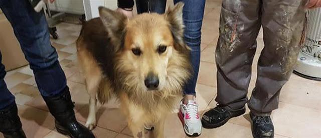 Υιοθετήθηκε ο σκύλος της αδικοχαμένης Αγγελικής - Φωτογραφία 1