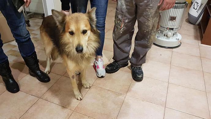 Υιοθετήθηκε ο σκύλος της αδικοχαμένης Αγγελικής - Φωτογραφία 2