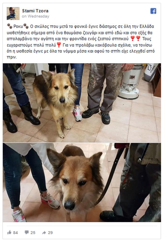 Υιοθετήθηκε ο σκύλος της αδικοχαμένης Αγγελικής - Φωτογραφία 3