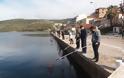 Γέμισε γαρίδες και γλώσσες η θάλασσα της Αμφιλοχίας | Μικροί-μεγάλοι στο ψάρεμα με την απόχη στο χέρι | ΦΩΤΟ - Φωτογραφία 10