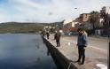 Γέμισε γαρίδες και γλώσσες η θάλασσα της Αμφιλοχίας | Μικροί-μεγάλοι στο ψάρεμα με την απόχη στο χέρι | ΦΩΤΟ - Φωτογραφία 13