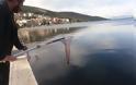 Γέμισε γαρίδες και γλώσσες η θάλασσα της Αμφιλοχίας | Μικροί-μεγάλοι στο ψάρεμα με την απόχη στο χέρι | ΦΩΤΟ - Φωτογραφία 15