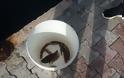 Γέμισε γαρίδες και γλώσσες η θάλασσα της Αμφιλοχίας | Μικροί-μεγάλοι στο ψάρεμα με την απόχη στο χέρι | ΦΩΤΟ - Φωτογραφία 19