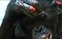 Σώστε τον Μπίλι: Τρομακτικό bullying πιθήκων σε χιμπατζή μέσα σε ζωολογικό κήπο - Φωτογραφία 3