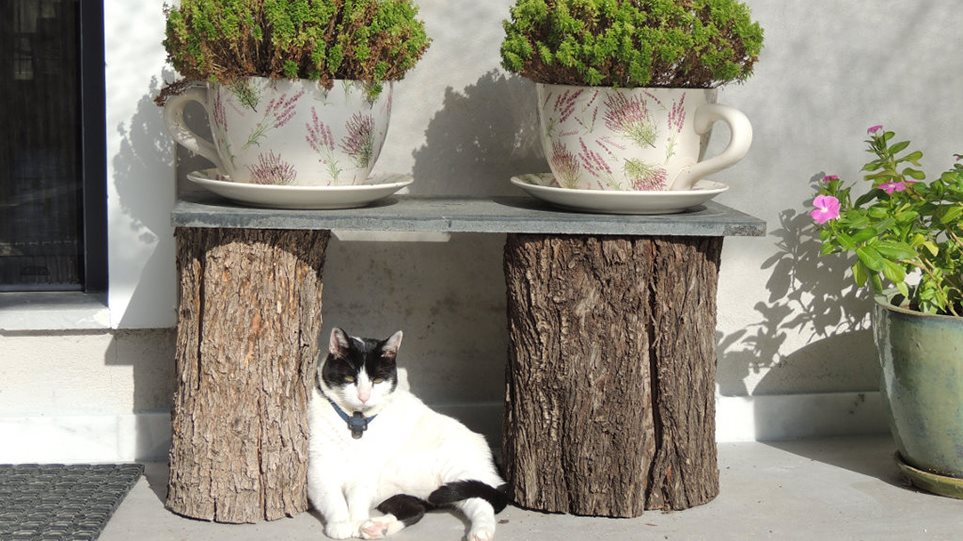Το κτήμα της τρελής γάτας - Φωτογραφία 1