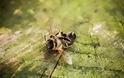Τι μπορεί να δημιουργήσει στον πλανήτη η ολοένα και αυξανόμενη εξαφάνιση των εντόμων;
