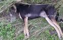 Νέο περιστατικό θανάτωσης σκύλου με φόλα- δικογραφία από το Α.Τ. Βόνιτσας