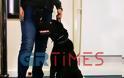 Άτλας: O σκύλος «φόβος και τρόμος» των ναρκεμπόρων (VIDEO-ΦΩΤΟ)